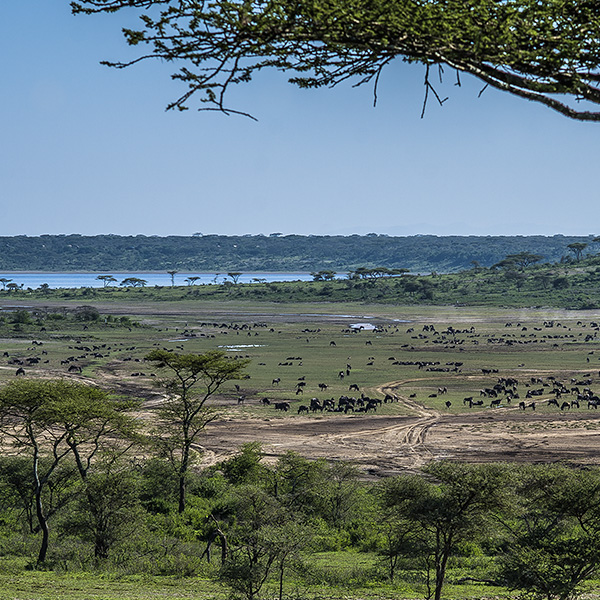 ndutu surroundings