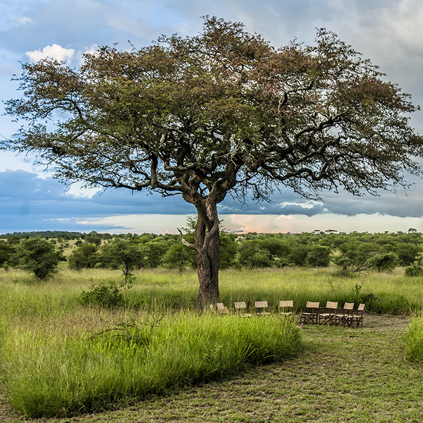 serengeti surroundings